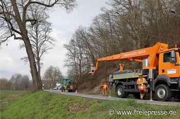 Am Steilhang in Waldenburg fallen die Bäume - Freie Presse