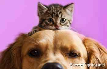 Tribiano: cani e gatti potranno essere tumulati insieme ai propri padroni - 7giorni