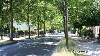 Bäume und Naturschutz: Stadt Falkensee verpflichtet sich zu Nachpflanzungen auf öffentlichem Grund - moz.de