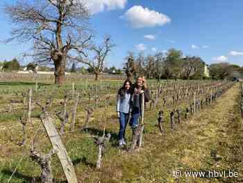 """Vorst nam Limburgse wijnboeren in Frankrijk te grazen: """"In veertig jaar nooit gezien"""" - Het Belang van Limburg"""
