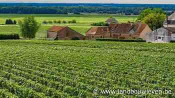 Derde van Franse wijnproductie 'verloren' als gevolg van vorst - Landbouwleven