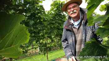 Schade door vorst in Westfriese wijngaard beperkt, einde nachtvorst in zicht - NH Nieuws
