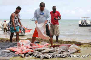 Seychelles' report to Fisheries Transparency Initiative shows fishing access agreements, stock information, catch data - Seychelles News Agency