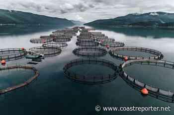 Five Coast companies to receive fisheries funding - Coast Reporter