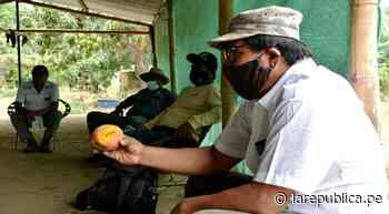 Piura: Senasa y productores de Morropón se organizan para controlar plagas LRND - LaRepública.pe