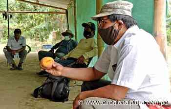 SENASA y productores de Morropón se organizan para controlar la plaga moscas de la fruta - El Regional