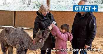 Oscars Farm bei Hardegsen: Namensgeber lernt Kamelfohlen Suana kennen - Göttinger Tageblatt