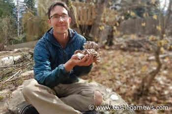 Kaslo mushroom farmer given green light for unique project - Castlegar News