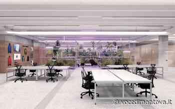 Ecco il giardino innovativo dentro gli uffici di Treré di Asola   Voce Di Mantova - La Voce di Mantova