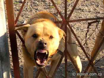 Alerta por brote de rabia animal en San Juan del Cesar - ElPilón.com.co