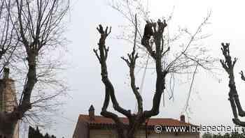 Villepinte. Coupe de printemps pour 31 arbres - ladepeche.fr