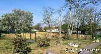Gujan-Mestras : les premiers jardins partagés matérialisés parc du Château d'eau - Sud Ouest