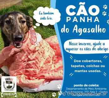 Siqueira Campos lança Cãopanhado Agasalho para animais de abrigo - Tribuna do Vale