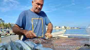 ¡Atención mazatlecos! Ya llegó el pajarito a las costas de Mazatlán - LINEA DIRECTA