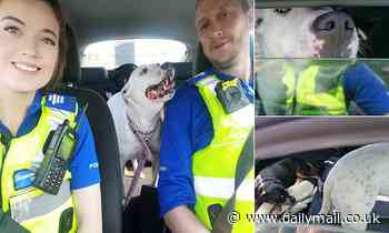 Police break into hot car to save two dogs left without water