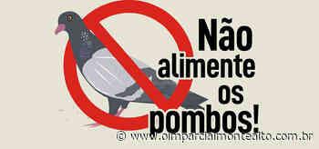 Autoridades fazem apelo para que a população não alimente os pombos – Jornal O Imparcial - O Imparcial – Monte Alto