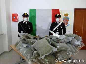 BLITZ DEI CARABINIERI A PRATELLA, SCOPERTA COLTIVAZIONE DI MARIJUANA - Appia Polis
