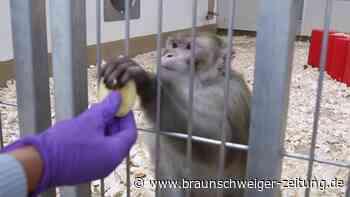 Tierschutz versus Wissenschaft: Corona-Forschung treibt Alternativen zu Tierversuchen voran