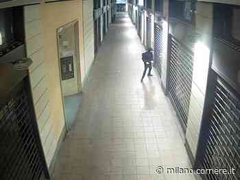 Cusano Milanino, fanno esplodere bomba carta davanti al negozio per intimidire una testimone - Corriere della Sera