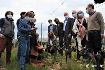 Gel en Gironde. A Langon, les élus visitent les vignes sinistrées - Le Républicain