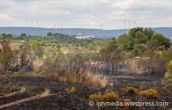 VILLEVEYRAC : 5 hectares de végétation partent en fumée. - IPH Média
