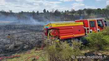 Villeveyrac : un feu de d'herbes et de garrigues parcourt 4 hectares - Midi Libre