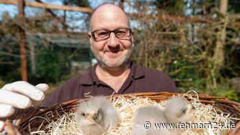 Vogelpark Walsrode: Baby-Boom bei den Riesen-Seedlern - fehmarn24