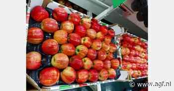 Poolse appelbomen ondervonden nauwelijks schade van recente vorst - AGF.nl
