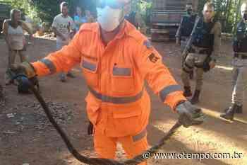 Bombeiros resgatam cobra de quase 2 metros em casa de Araguari - O Tempo