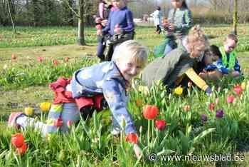Iedereen in het dorp krijgt bosje tulpen, en dat dankzij afgelast tulpenfestival