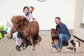 Dierenarts ziet 'mirakel': merrie Patatje geeft weesveulentje Daisy nieuw leven