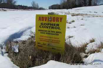 Gopher control underway in Regina parks; wildlife advocate concerned - News Talk 980 CJME
