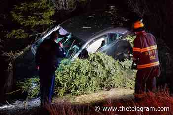 Car crashes into trees in Mount Pearl early Sunday morning, one man sent to hospital - The Telegram