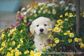 Guide to dog-friendly plants for the garden | The Landscaper - The Landscaper