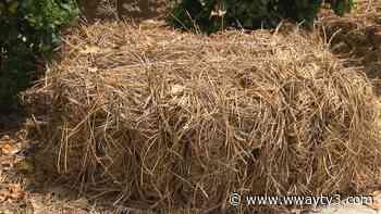 Wilmington landscaper speaks out on pine straw shortage - WWAY NewsChannel 3