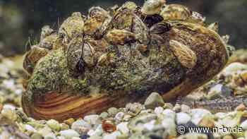 Umfangreiche Studie präsentiert: Invasive Arten richten massiven Schaden an