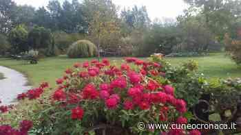 """MONDOVI'/ Comizio Agrario: 2 lezioni online sul giardinaggio """"Fiori e Forme. 100 idee per giardini facili e comodi""""- Cuneocronaca.it - Cuneocronaca.it"""