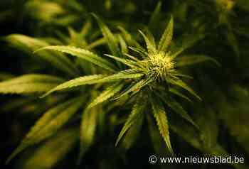 Man (30) aangehouden na cannabisdeals aan bushalte