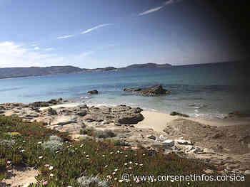 La photo du jour : une petite crique entre Calvi et Lumiu - Corse Net Infos