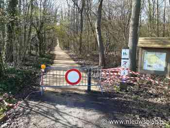 Vernieuwde fiets- en wandelpaden krijgen vleermuisvriendelij... (Begijnendijk) - Het Nieuwsblad