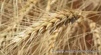 Weizen: Erholung nimmt Fahrt auf