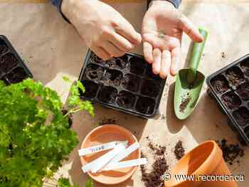 Seedy Sunday taking place in Eganville March 28 - Brockville Recorder and Times