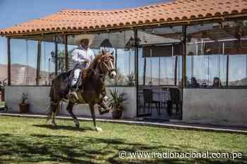 Conocimientos del chalán para crianza del caballo de paso son declarados patrimonio cultural - Radio Nacional del Perú
