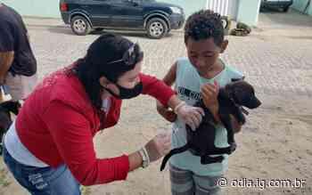 Arraial do Cabo vacina mais de 5 mil cães e gatos contra a raiva | Arraial do Cabo | O DIA - Jornal O Dia