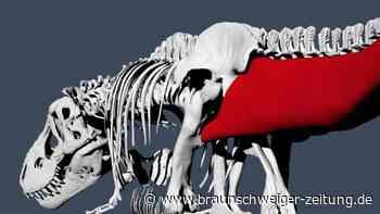 Paläontologie: Studie: T. rex ging etwas langsamer als ein Mensch