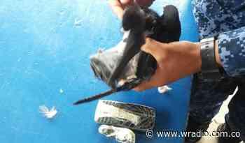 Interceptan dos palomas mensajeras en la cárcel de Cómbita - W Radio