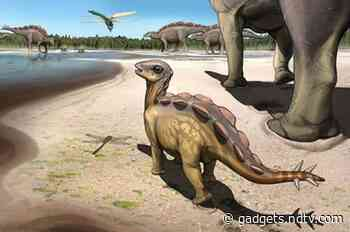 Cat-sized Stegosaur Footprints 6-cm Long Found in China
