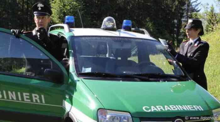 Gardone Val Trompia, pranzo 'clandestino' con specie protette in Comunità montana - IL GIORNO