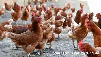 Hühnereier in Ehmen wieder handelbar – Verkaufsverbot aufgehoben