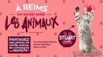 Reims. Votez maintenant pour votre animal préféré - L'Union